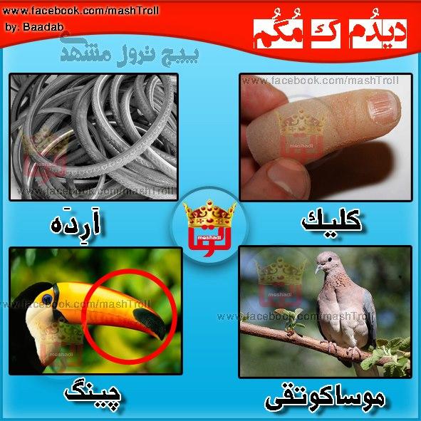 مشد کلیک - ارده - موساکوتقی -چینگ - مشتی رضا - ترول مشهد آموزش لهجه مشهدی